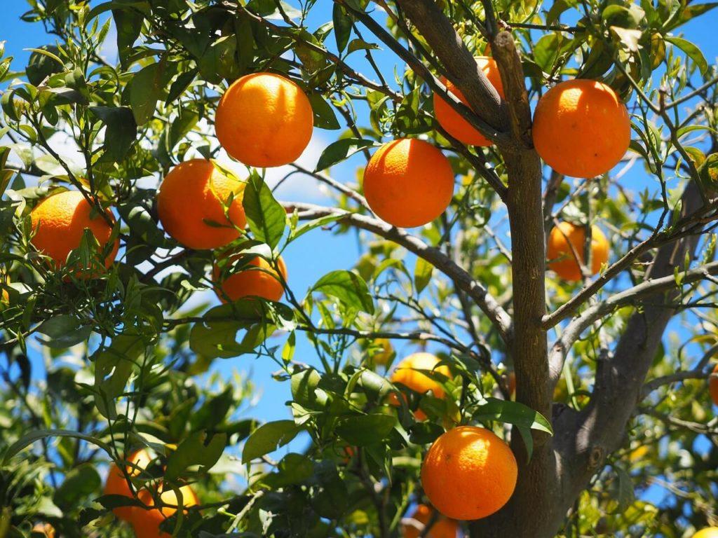 Orangen bei Vitamin-A-Mangel